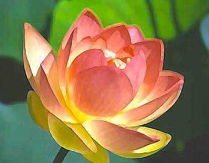 lotus-for-Diversity
